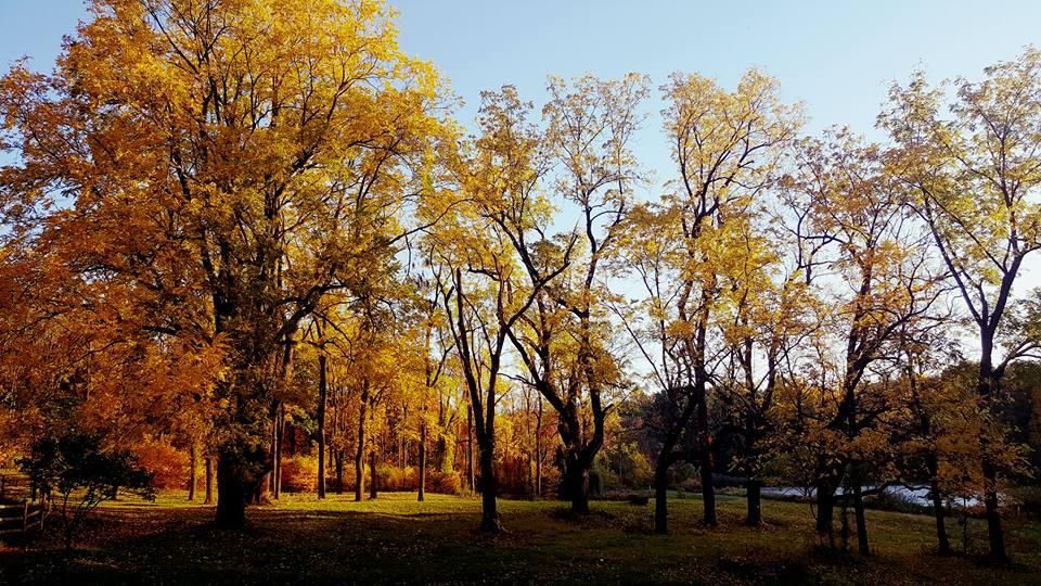 pasture-fall